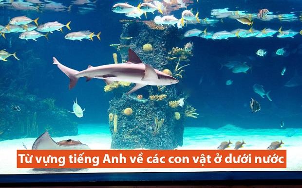 Từ vựng tiếng Anh về các con vật ở dưới nước